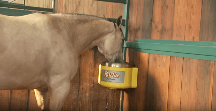 Best-Horse-Automatic-Waterer