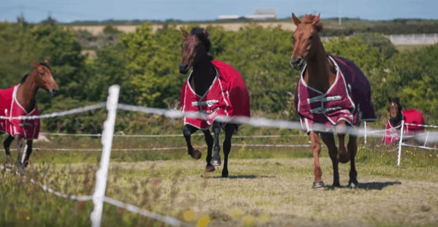 Best-Horse-Electric-Fence