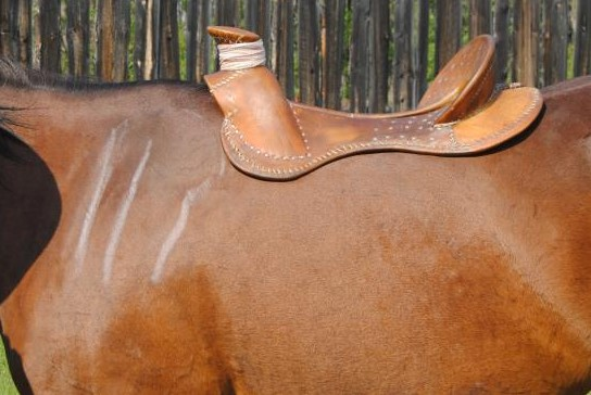 How to Measure a Horse for a Saddle