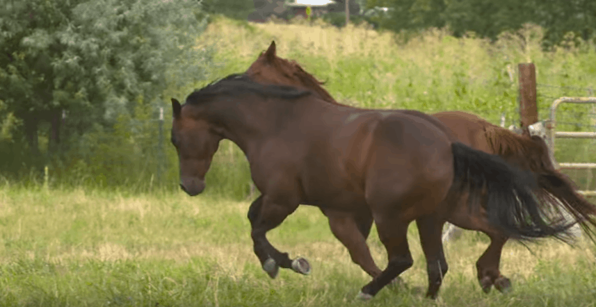 Put-Weight-on-a-Horse
