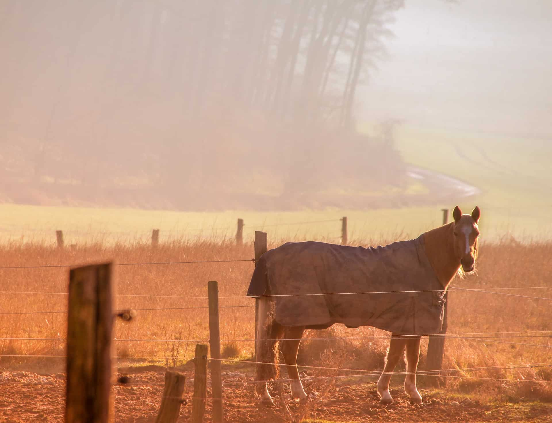 Electric-Fence-Charger-for-Horses