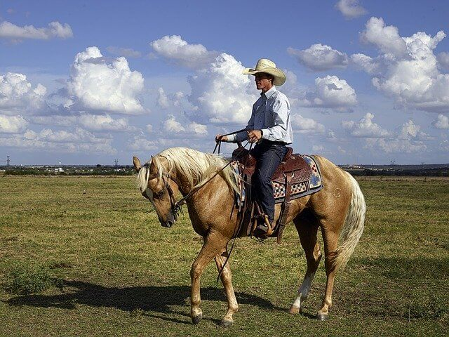Quarter-Horse-and-Thoroughbred