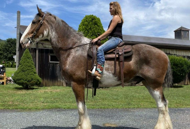 Why You Should Ride A Clydesdale Horse