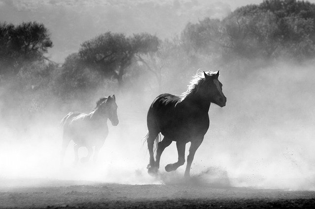 How long can a horse run before it dies
